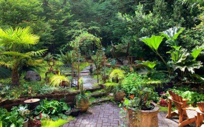 Informasi Ahli Taman Jogja Untuk Mempercantik Rumah Anda